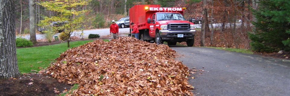 Fall cleanup nh